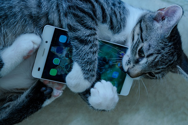 cat attacking cellphone
