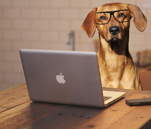dog working from home on a laptop